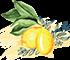 icon-fruto-v1